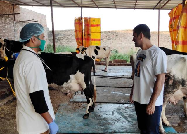 Dhoni is busy preparing special breed of cow in ranchi